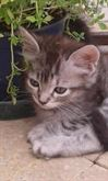 Pulizia/cat sitter